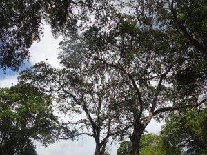 ヴィハーラ・マハー・デーヴィ公園